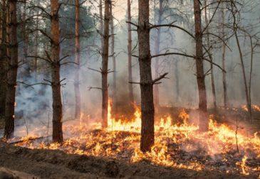 Пожар в Чернобыльской зоне удалось остановить